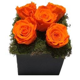 Aranjament 5 trandafiri nemuritori portocalii