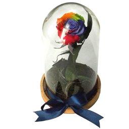 Dragoste si trandafiri nemuritori - curcubeu