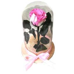 Dragoste si trandafiri nemuritori - roz