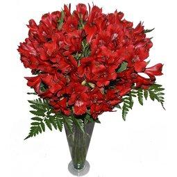 Alstroemeria rosii