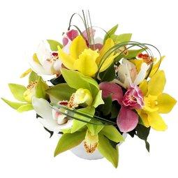 Radiant mix de orhidee