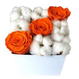 Trandafiri stabilizati portocalii si flori de bumbac