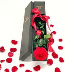 Single Red Rose Preserved | Valentine
