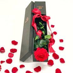 Rosa Rossa Singola Senza Tempo | Rose Rosse San Valentino | FlorPassion Box