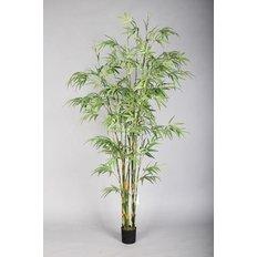 Bamboo Plant, 180CM
