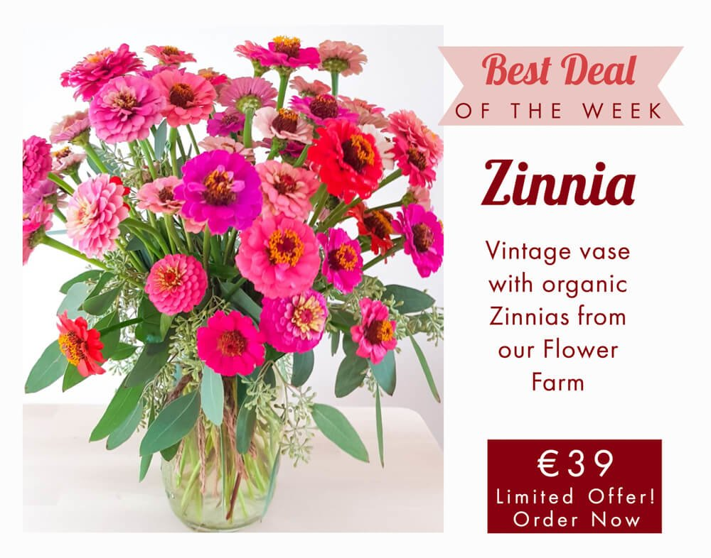 zinnia slow flowers delivery to milan como monza