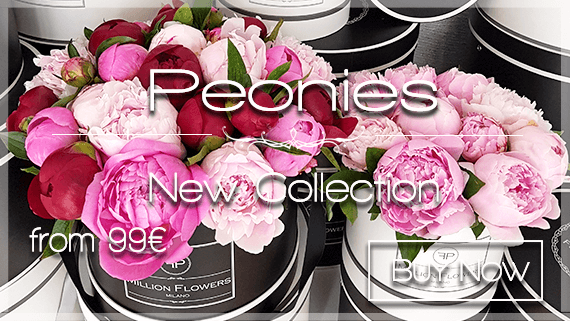 Send Peonies to Milan