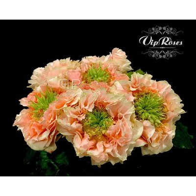 Copperfield Roses
