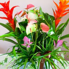 Exotic Plants Arrangement
