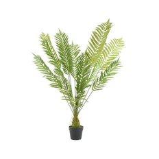 Fern Plant, 130CM