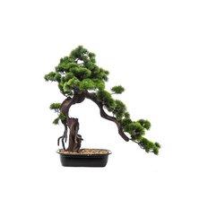 Green Bonsai, 66CM