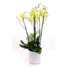 Send Orchids in Milan | Local Florist Monza