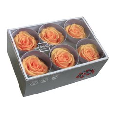 Orange Preserved Roses, 6pcs