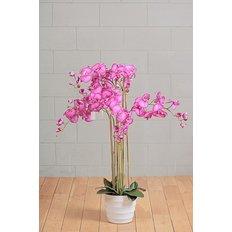 Phalaenopsis Orchidea, Fuxia, 118CM