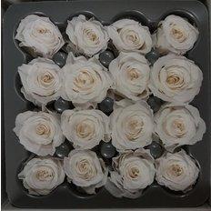 ROSA Stabilizzata 16pz Bianco
