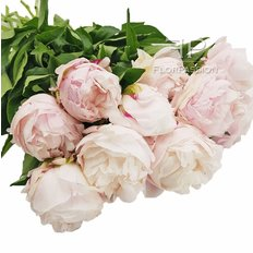 Pink Peony | Send Peonies Same Day Delivery Milan