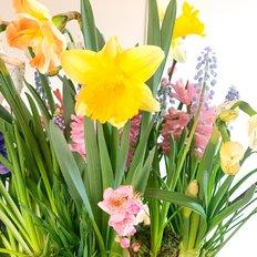 Spring Garden Delight