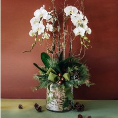 White Orchid Christmas Gift | Send Flowers to Milan Free Delivery